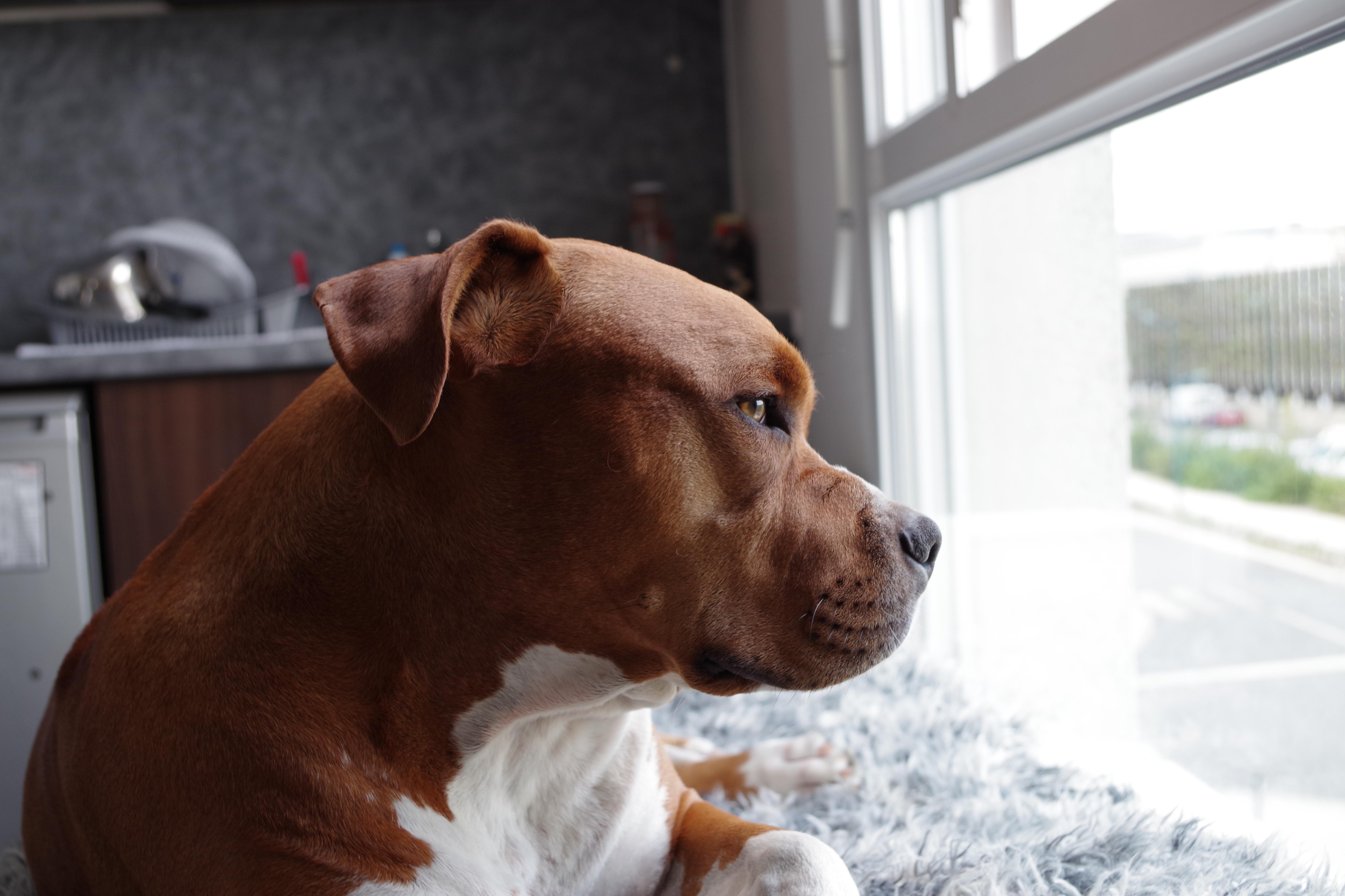 Storm Door with Pet Door | Know Pet's Likes