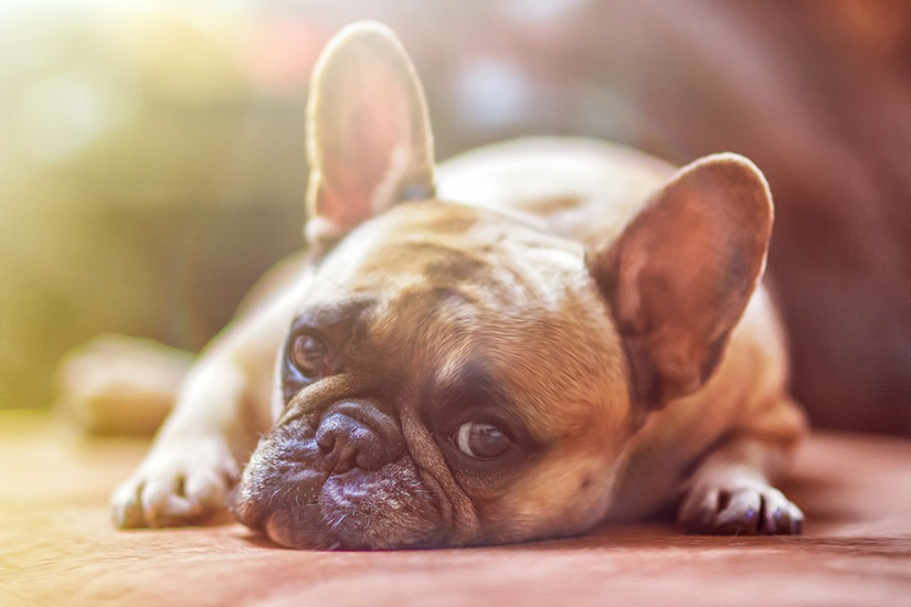 The 4 Types of Storm Doors Dogs Love.jpg