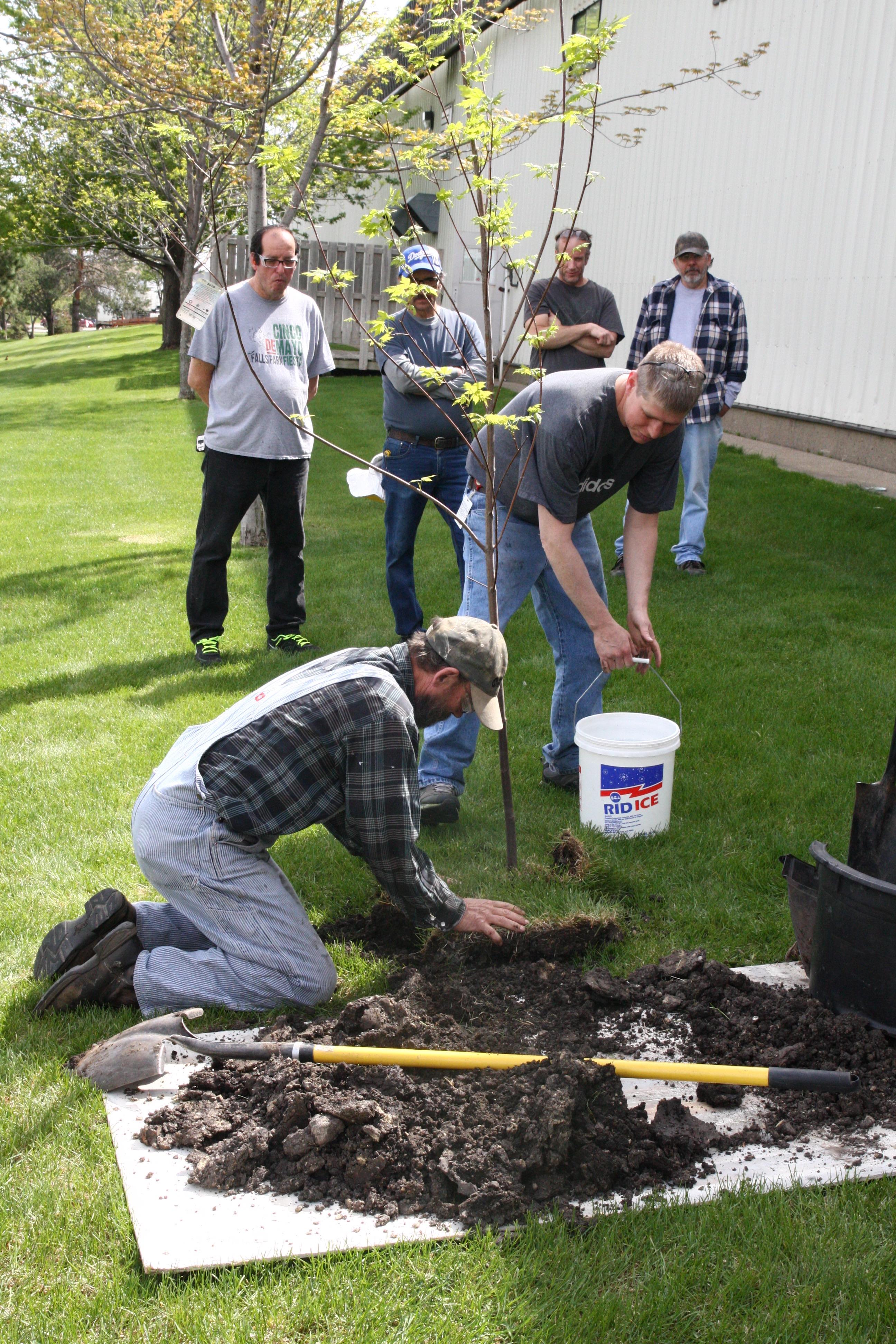 Why We Celebrate Arbor Day.jpg