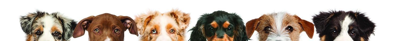 larsondogbanner
