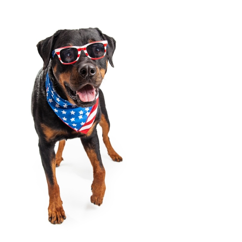 Pet Safety Tips   July 4th Doesn't Have To Be Ruff for Your Pets