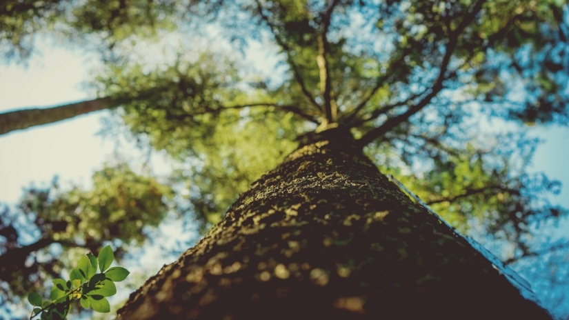 Why Larson Doors Celebrates Arbor Day & Why You Should Too