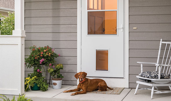 Doggone Smart Door featured on GMA