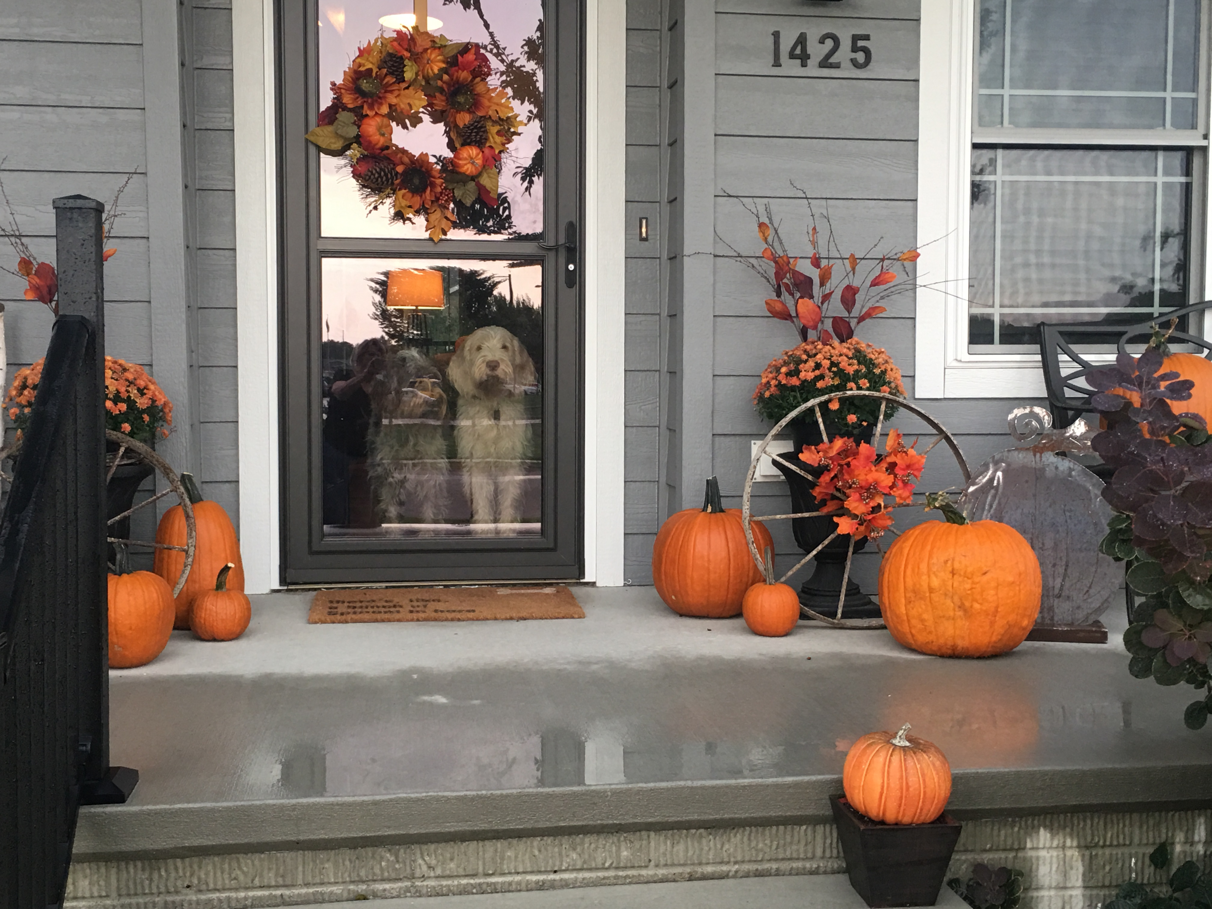 Corn Stalks, Mums, and Buffalo Plaid (oh my!)